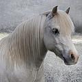 Snow Pony by Linda Lees