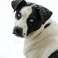 Snow Puppy by Jan M Holden