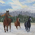 Snow Runners by Sherri Anderson