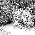Snow Scene 1 by Patrick J Murphy