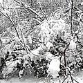 Snow Scene 4 by Patrick J Murphy