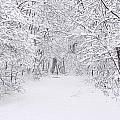 Snow Scene Tree Branches by Bruce Nutting