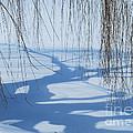 Snow Shadows I by Nancy Mueller