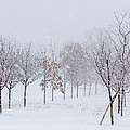 Snow Storm by Pete Hendley