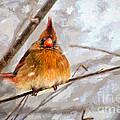 Snow Surprise - Painterly by Lois Bryan