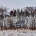 Snow Tree Line by Gary Gish