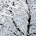 Snow Tree by Mary Beth Landis