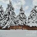 Snow Trees by Southwindow Eugenia Rey-Guerra