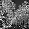 Snow Trees by Thomas  McGuire