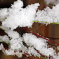 Snow Twig Abstract by Karen Adams