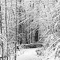 Snow Wall by Jonathan Steele