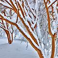 Snow Wonderful Snow - Greensboro North Carolina by Dan Carmichael