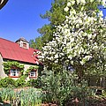Snowball Tree In The Garden by Gordon Elwell