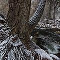 Snowbark by Bill Sherrell