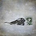 Snowbird by Melissa Smith
