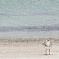 Snowbird by Michelle Constantine
