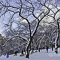 Snowboarders In Central Park by Madeline Ellis