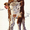 Country Life Winter Baby Calf by Dale Jackson