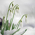 Snowdrops On Ice by Sharon Talson