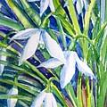 Snowdrops by Trudi Doyle