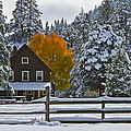 Snowed In At The Ranch by Mitch Shindelbower