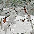 Snowed Under by Leone Lund