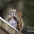 Snowflake Squirrel by Karin Pinkham