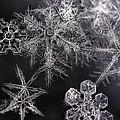 Snowflakes by Eunice Gibb