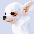 Snowman - White Chihuahua by Rebecca Korpita