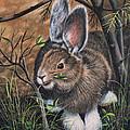 Snowshoe Rabbit by Ricardo Chavez-Mendez