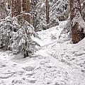 Snowshoe Trail by James Wheeler