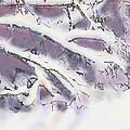 Snowtract by Ian  MacDonald