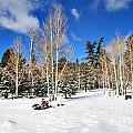 Snowy Aspen Grove by Donna Greene
