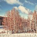 Snowy Aspens  by Donna Greene