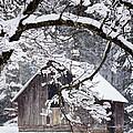 Snowy Barn 2 by Rob Travis