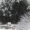 Snowy Bench by MTBobbins Photography