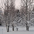 Snowy Bird Bath by Mike Wheeler