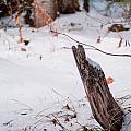 Snowy Blanket by Gwyn Hittle