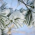 Snowy Branch by Melinda Weir
