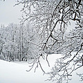 Snowy Branches by Aimee L Maher ALM GALLERY
