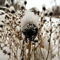 Snowy Cap by Cynthia Woods