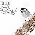 Snowy Chickadee Christmas Card by Lori Coleman