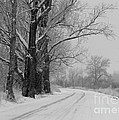 Snowy Country Road - Black And White by Carol Groenen