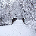 Snowy Day Bridge by Forest Floor Photography
