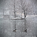 Snowy Day On The Island by Tina Miller