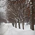 Snowy Day by Paul Schreiber