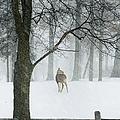 Snowy Deer by Margie Hurwich