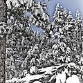 Snowy Dreams  by Saija  Lehtonen