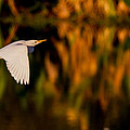 Snowy Egret Climbing Up To The Sky by Andres Leon