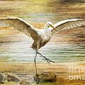 Snowy Egret Dancing  by Irina Hays